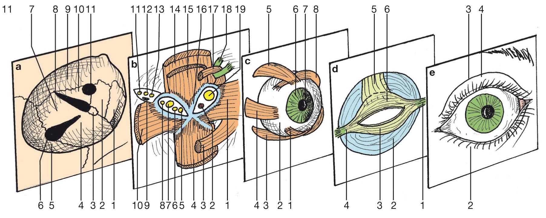 L'œil dans l'ouvrage de Michel Dufour_1