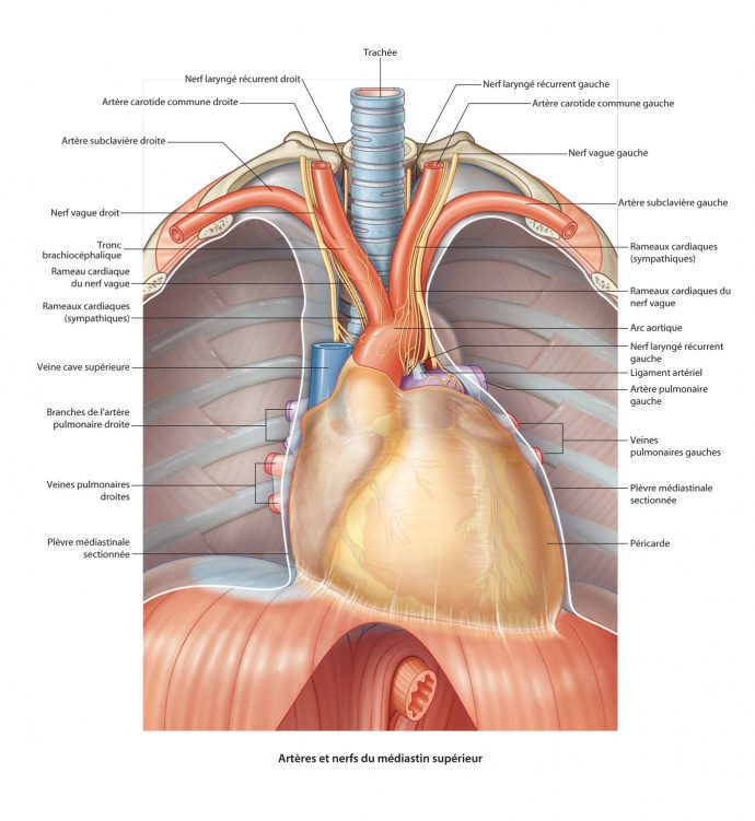 L'anatomie_7