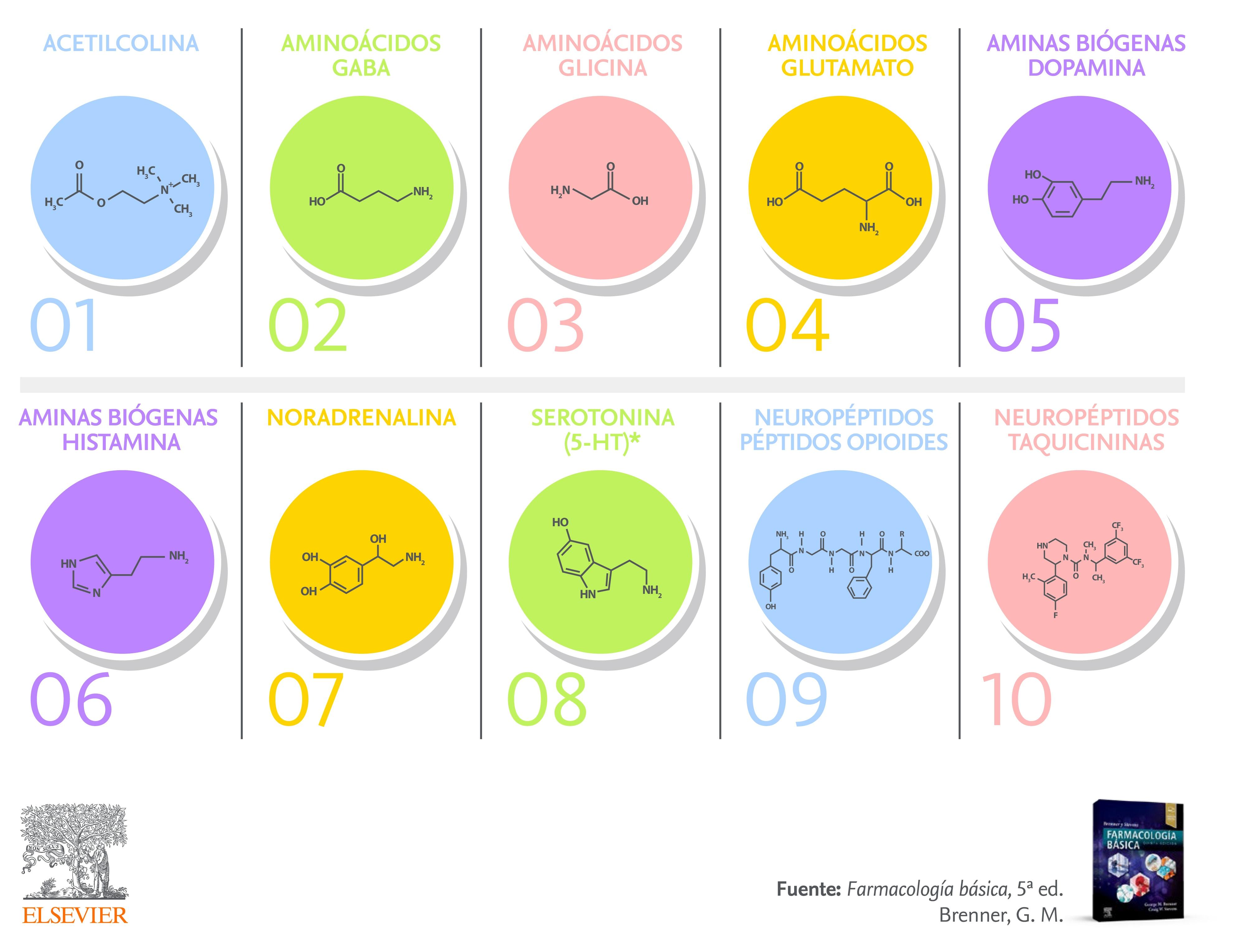 Los 10 neurotransmisores principales y su función en el sistema nervioso central