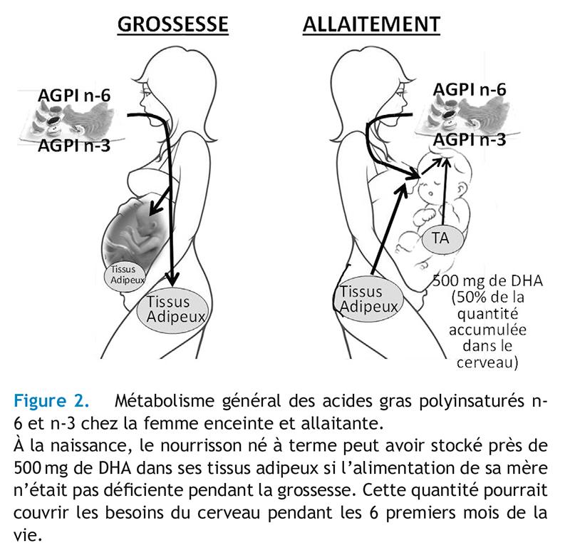 Figure 2. Métabolisme général des acides gras polyinsaturés n-6 et n-3 chez la femme enceinte et allaitante.