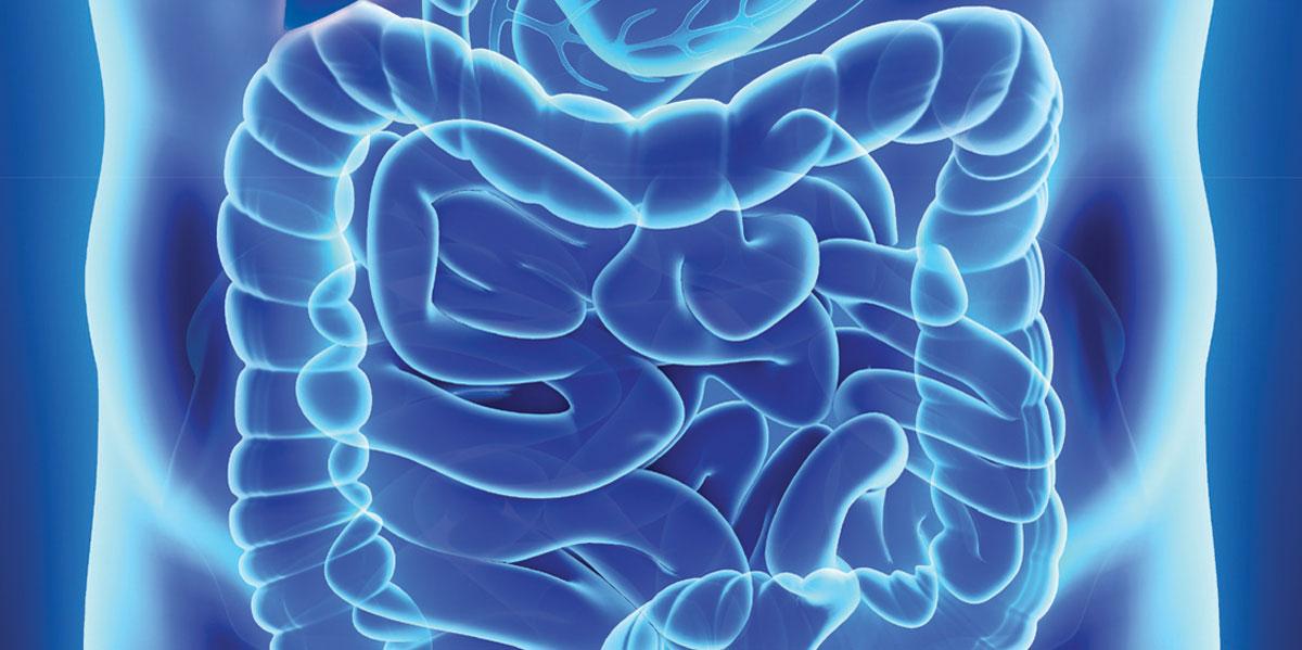 IFSI-Hepato-gastro-enterologie.jpg