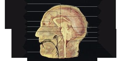 Neurophysiologie, dans une optique clinique