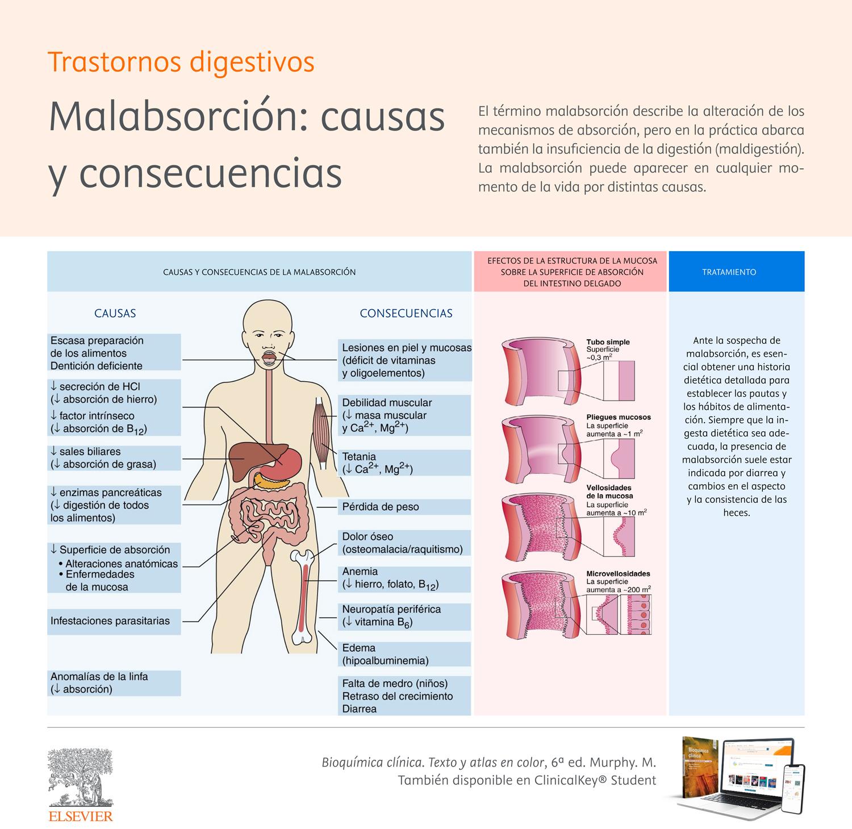 Bioquimica-malabsorcion.jpg