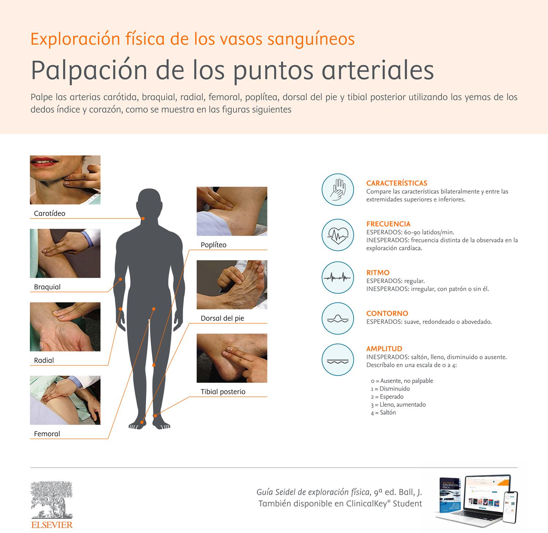 Palpación de los puntos arteriales y anomalías del pulso