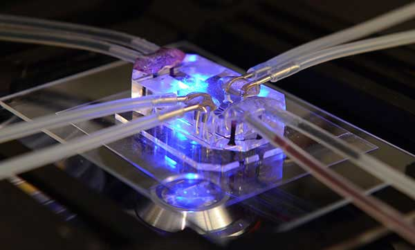 Lung-on-chip-testing-methods-could-boost-respiratory-disease-research600