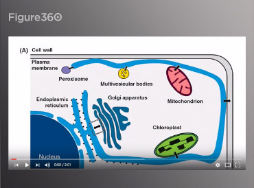 Figure360 lets Cell Press authors put their figures in context by narrating them on a video while zooming in to the most important aspects.