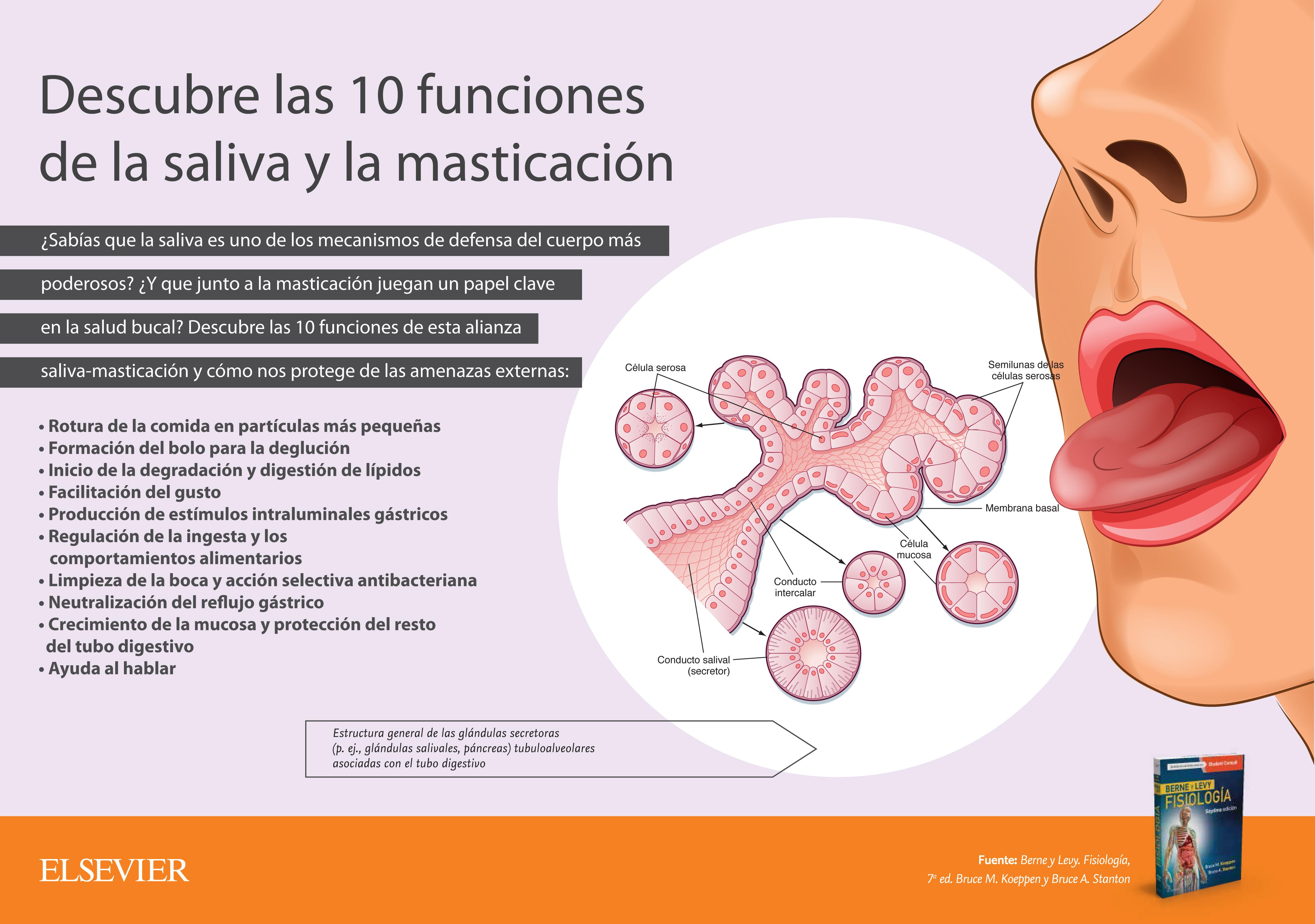 10 funciones de la saliva y la masticación