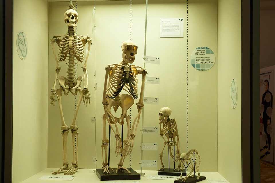 Ancestros-dieta.jpg