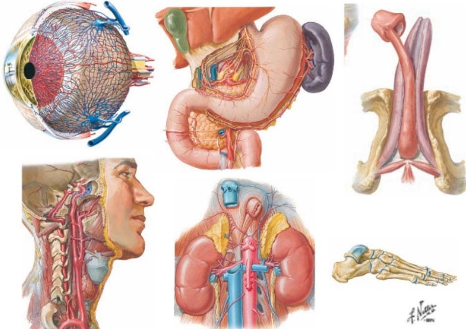 Anatomia-Pilar.jpg