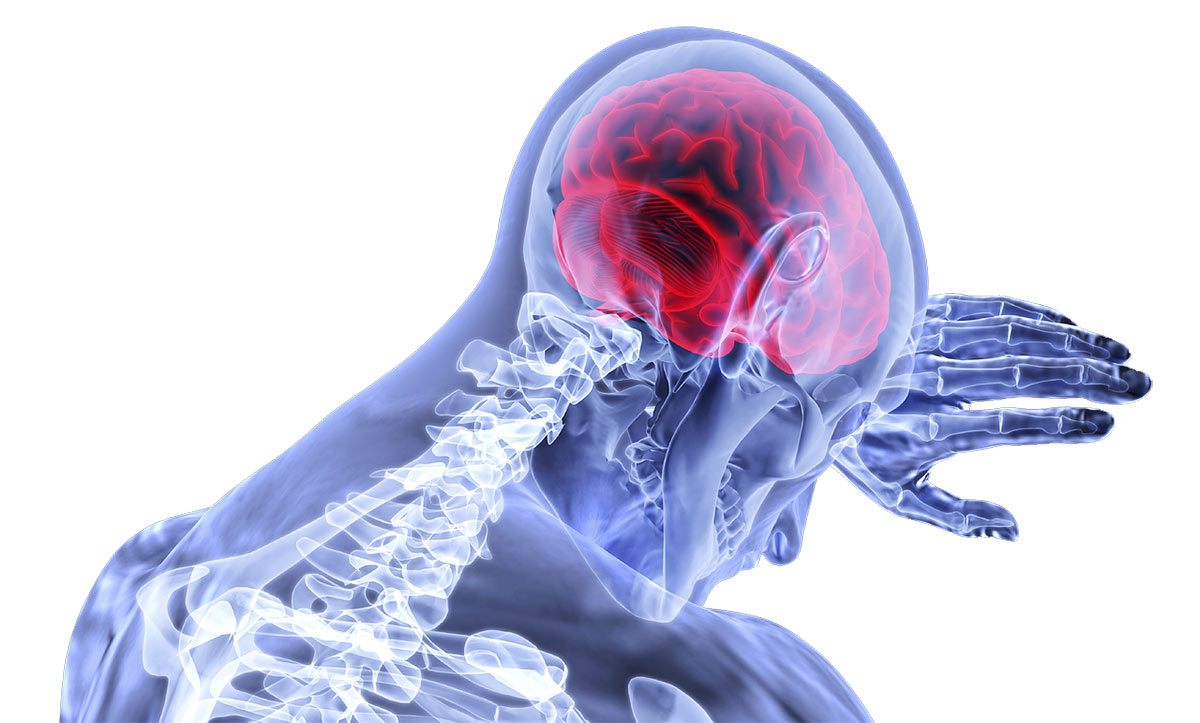 brain-3168269_1280.jpg