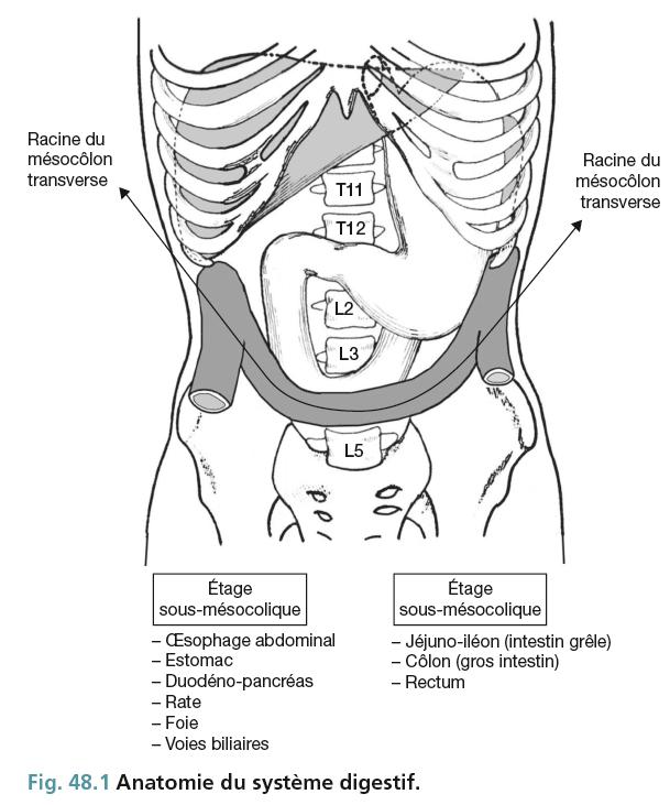 Fig. 48.1 Anatomie du système digestif.
