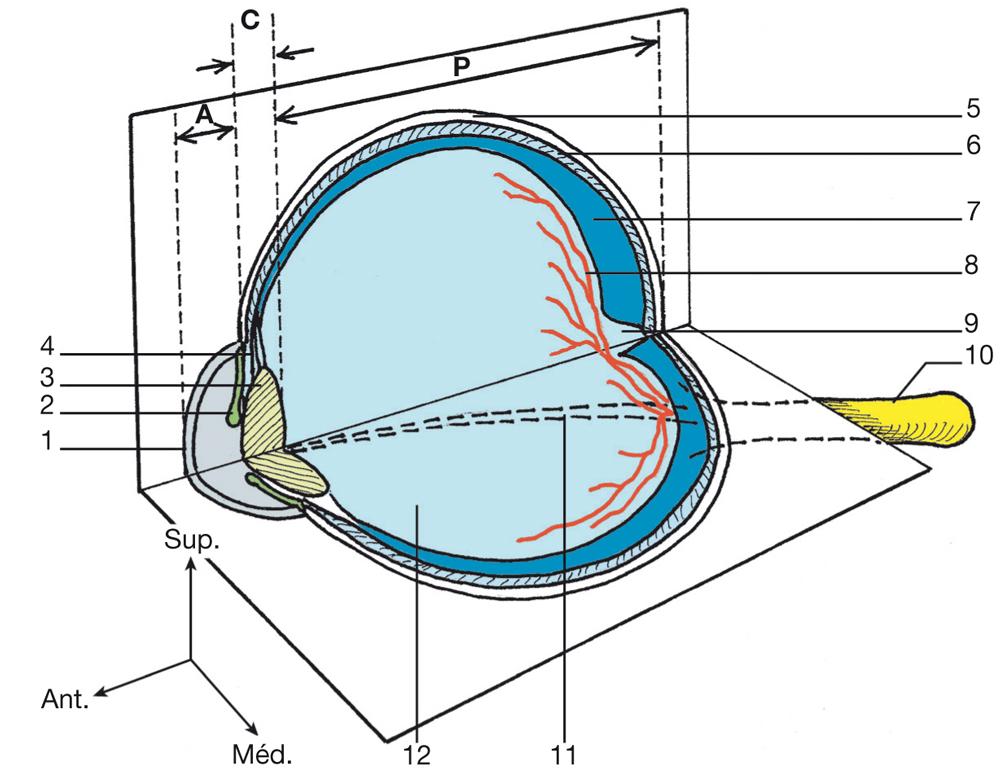 L'œil dans l'ouvrage de Michel Dufour_2