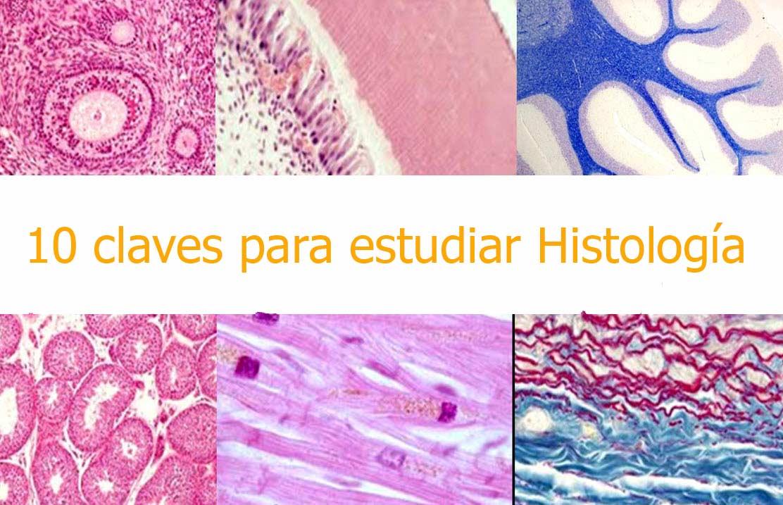10 claves para el estudio de Histología