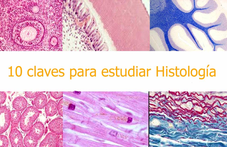 10-claves-para-estudiar-histologia-2018.jpg