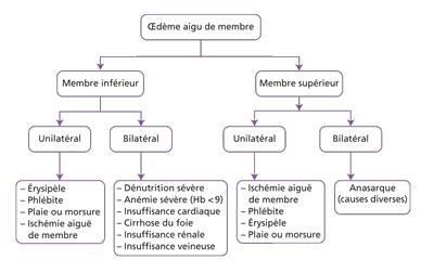 arbre décisionnel oedème