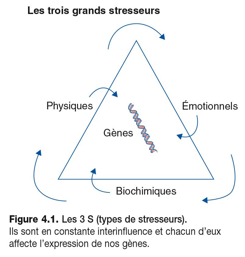 Figure 4.1 . Les 3 S (types de stresseurs). Ils sont en constante interinfl uence et chacun d'eux affecte l'expression de nos gènes.