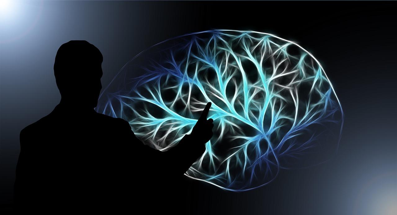 brain-3141247_1280.jpg