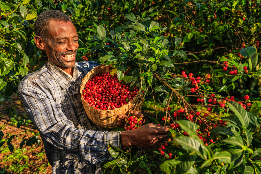 Sustainable crop certification helps people and nature but could do more for them