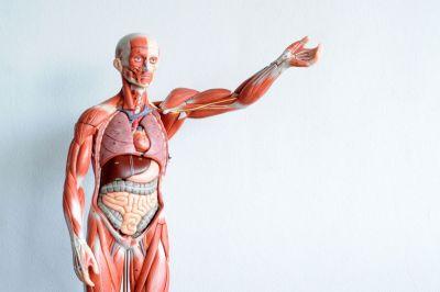 Anatomie – Hass oder Liebe?