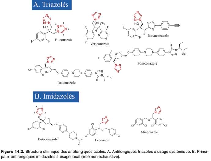 Antifongiques azolés_2