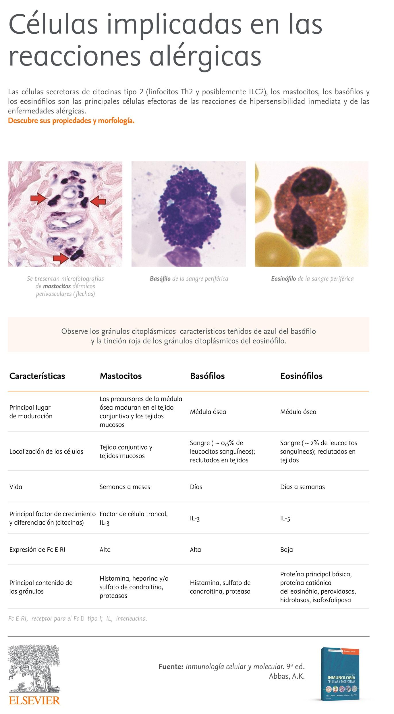 Células alergia Inmunología