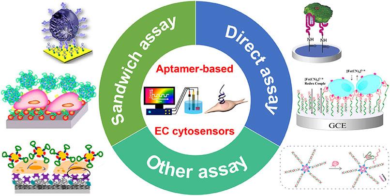 Aptamer-based-electrochemical-cytosensors