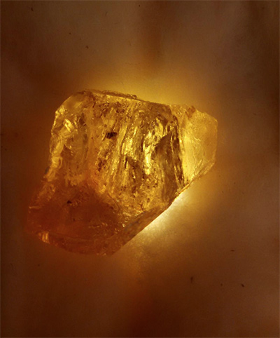 A blood-filled contemporary mosquito Joe Davis and colleagues inserted into fossilized amber (2013)