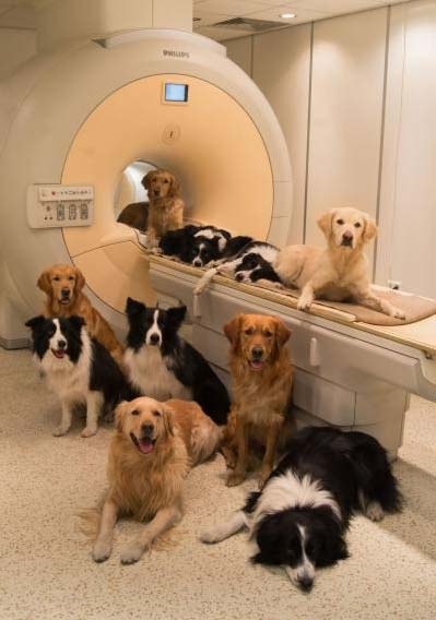 These are dogs at the MR Research Centre in Budapest. (Photo by Borbala Ferenczy)