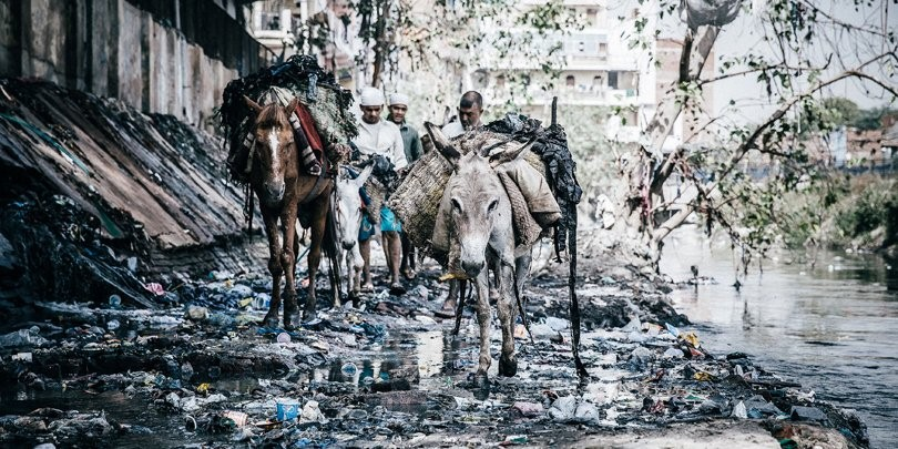 Horses and donkeys with their owners, clearing rubbish near a slum in the outskirts of New Dehli. (©Brooke/Freya Dowson)