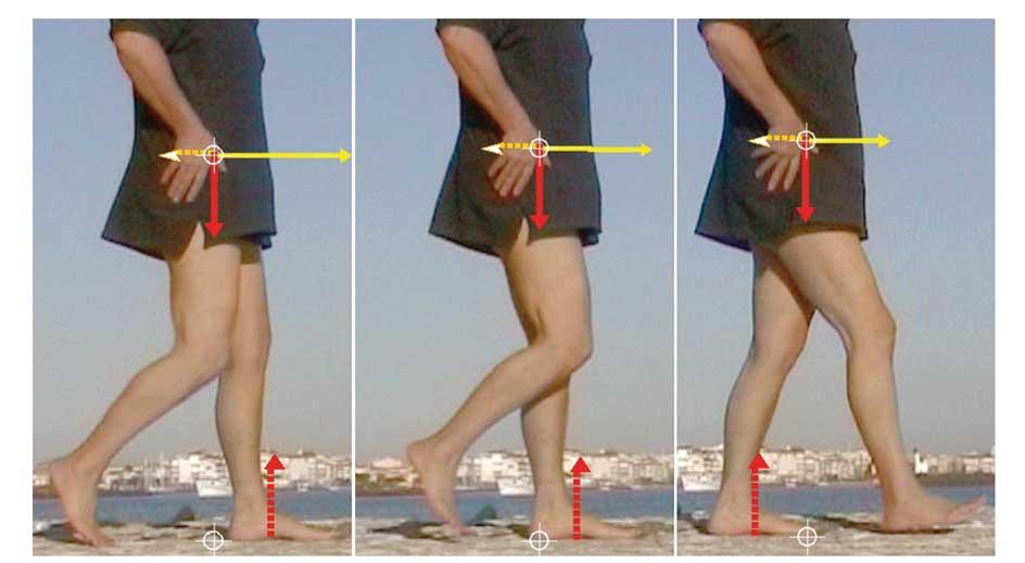 fig-2-8 Phase aérienne (pied droit). Le membre inférieur droit et le corps basculent en avant, le centre de gravité passe au-dessus du pied en appui. Source : Leemrijse Th, Valtin B. Pathologie du pied et de la cheville. 834 pages, Textbook on Foot and Ankle Surgery, Novembre 2009, édition Masson-Elsevier, ISBN 978-2-294-61208-4.
