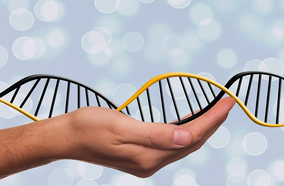 Genetica-poblaciones.jpg