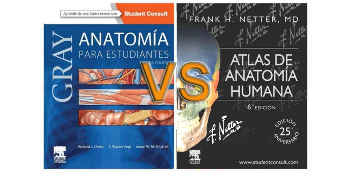 Netter vs. Gray: duelo de titanes en Anatomía