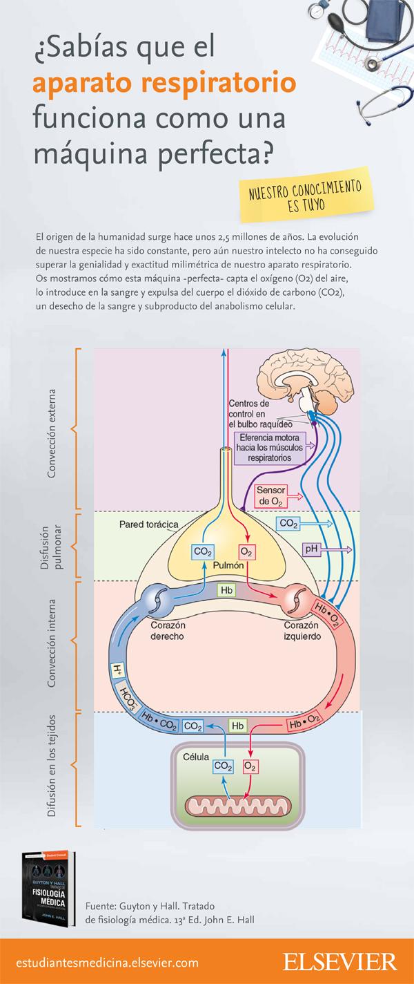 Infografia-Aparato-respiratorio (1)