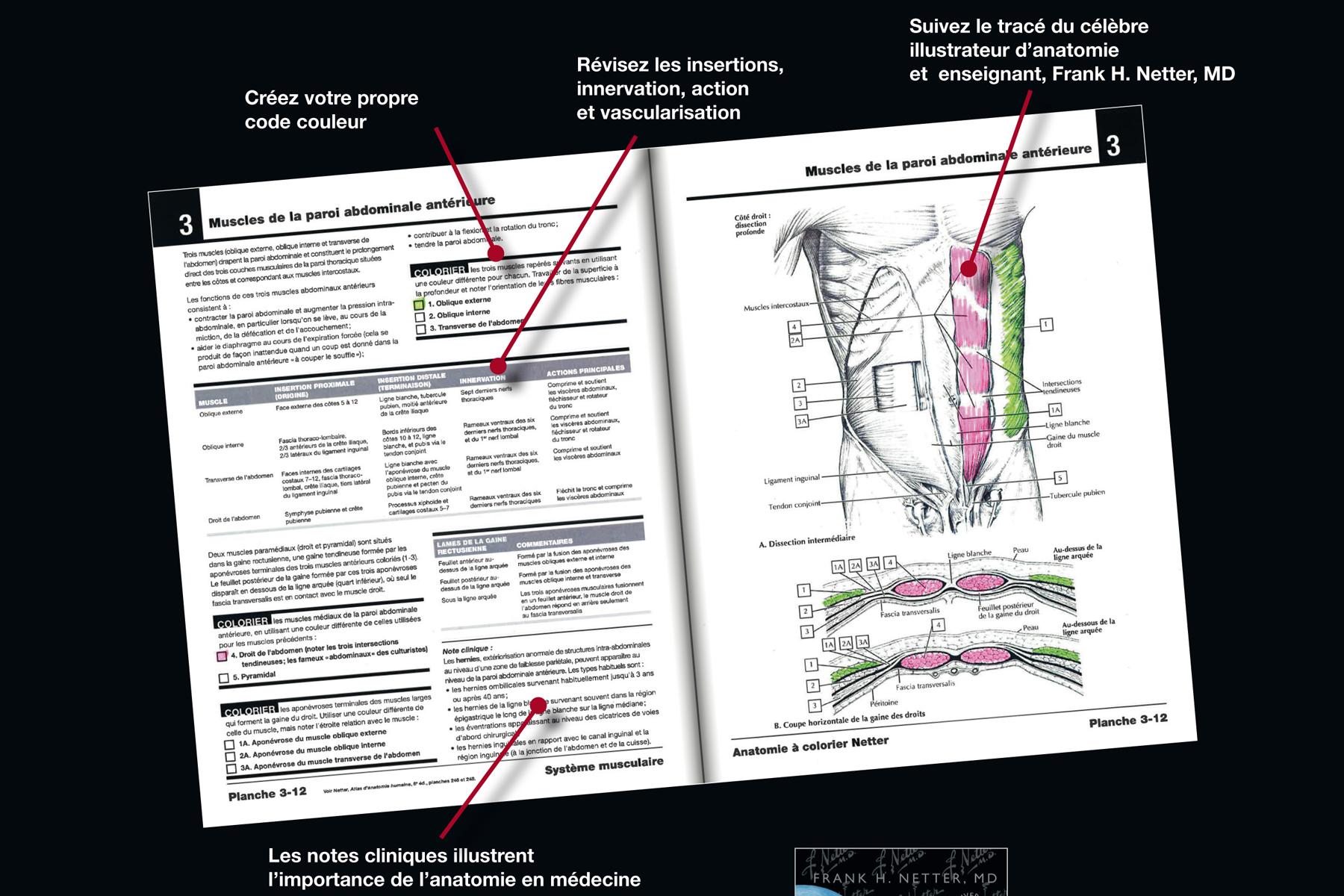 comment mémoriser anatomie