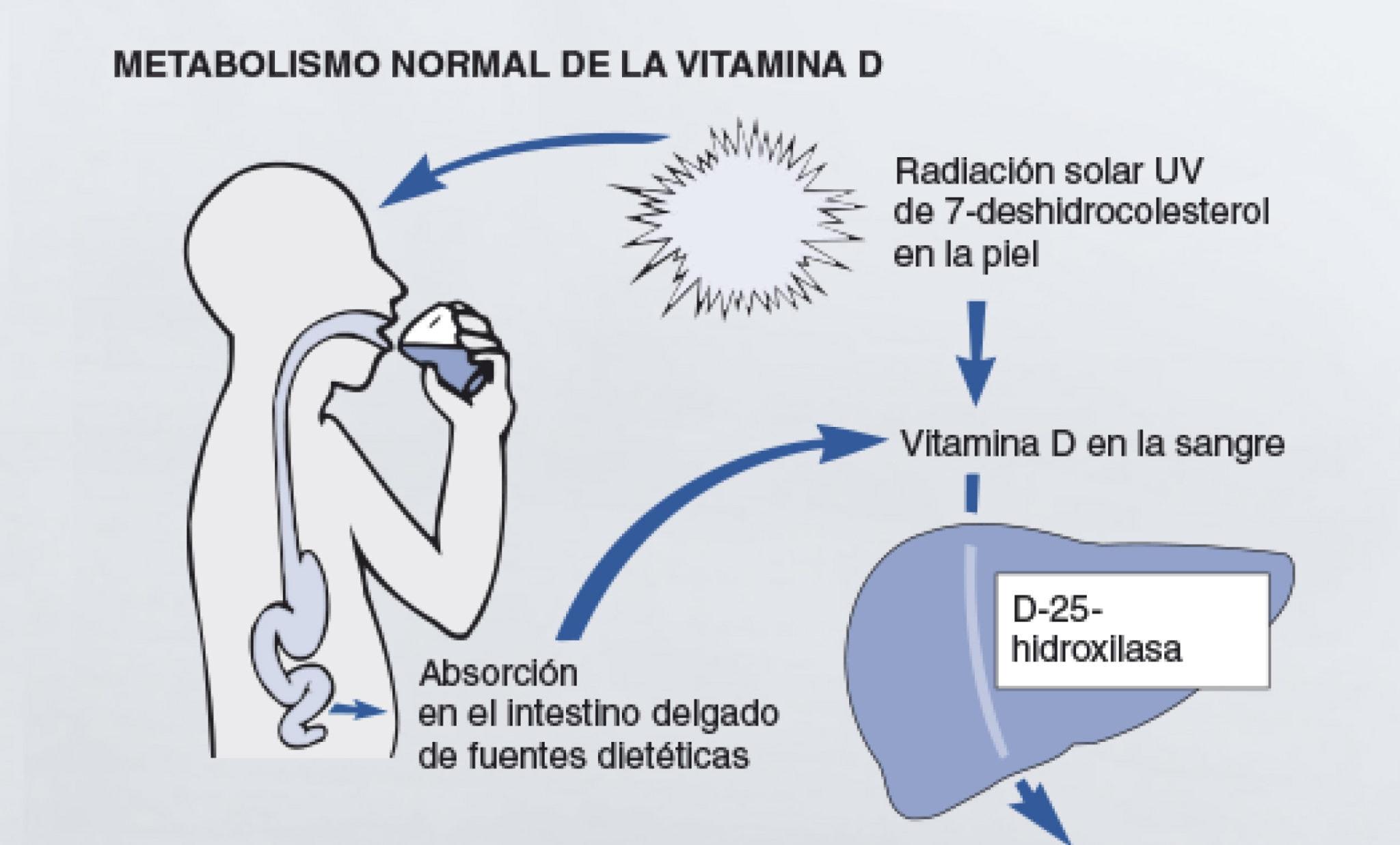 Infografia-Vitamina-principal.jpg