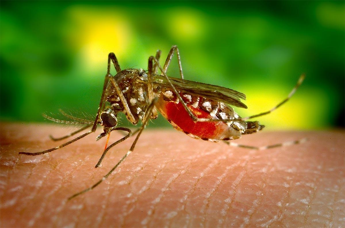 Una mirada hacia el futuro de las enfermedades tropicales parasitarias, una amenaza creciente