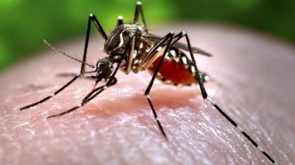 A Elsevier oferece acesso online gratuito aos mais atuais  conteúdos científicos baseados em evidências para auxiliar no combate ao Zika vírus