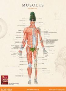 1 poster anatomie offert !