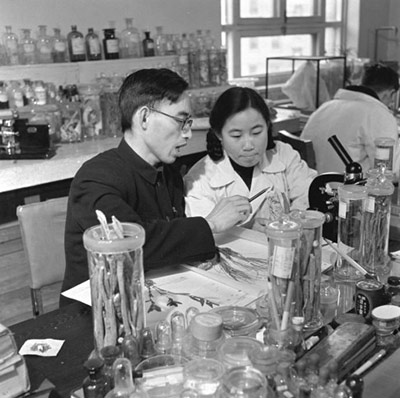 Tu Youyou and her then-tutor Lou Zhicen in 1951 (Public Domain via Wikimedia Commons, photographer unknown)