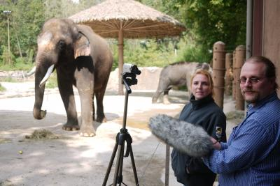 Angela Stoeger and Daniel Mietchen recording Koshik's vocalizations at the Everland Zoo in South Korea. (Current Biology, Stoeger et al.)