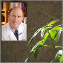 Joseph Alpert, PhD, and cannibis leaves