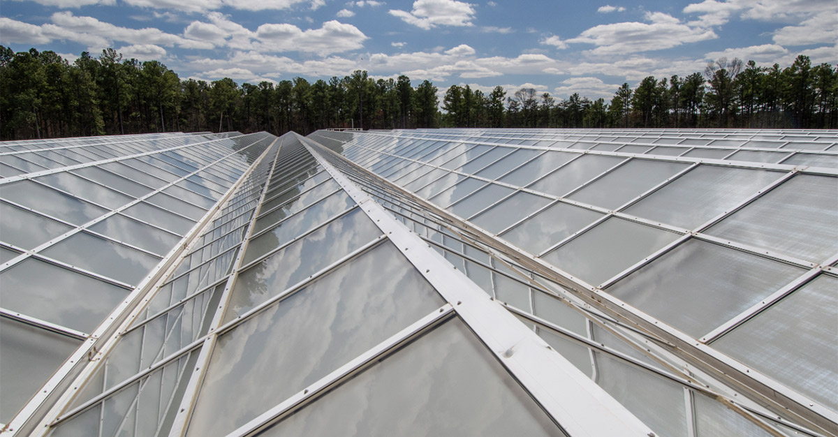 Technology is changing the way crops are managed; specially designed roofs can harvest light more efficiently. (Photo courtesy of Syngenta)