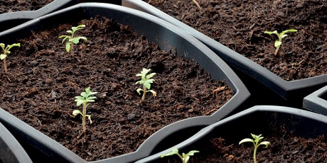 Growing plants from waste products | Elsevier