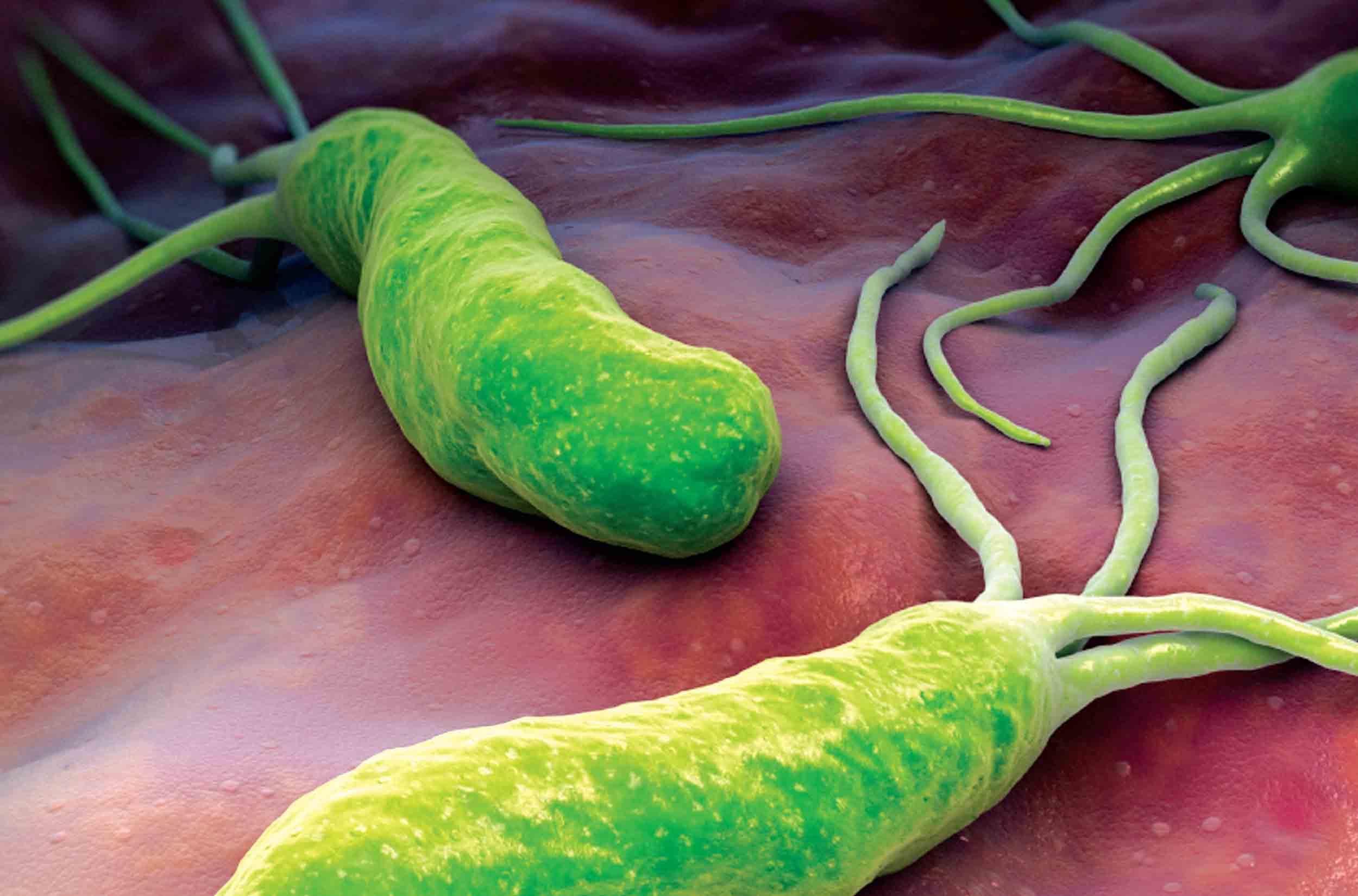 los-sintomas-del-helicobacter-pylori-bacteria.jpg