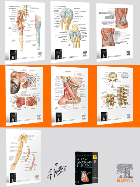 planches anatomie Netter