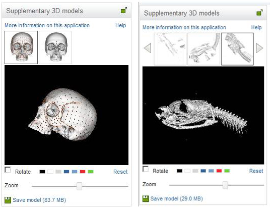 Figure 5. Surface rendering of 3D archaeological models.