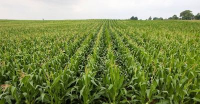 Digging into data to support the sustainable agriculture revolution