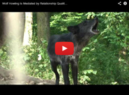 Wolf howling Is mediated by relationship quality rather than emotional stress