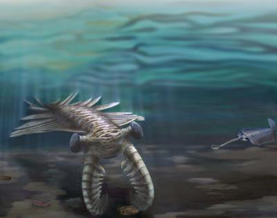 This image shows marine life during the Cambrian explosion (~520 million years ago). A giant Anomalocaris investigates a trilobite, while Opabinia looks on from the right and the