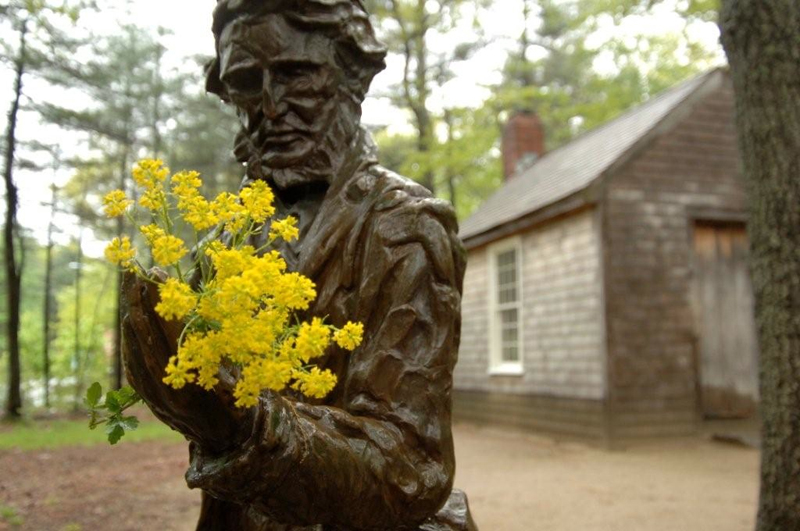 Thoreau kept detailed records of plant flowering dates in Concord, Massachusetts, from 1852 to 1858. A statue of Thoreau in front of a replica of his cabin at Walden Pond. (Photo by Richard B. Primack and Abraham J. Miller-Rushing)